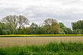 Lage - 2015-05-17 - LIP-009 Hardisser Moor (14).jpg