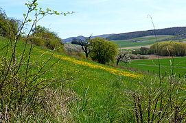 Landschaftsschutzgebiet Röderhofer Teiche und Egenstedter Forst - Sonnenberg-Südhangweide (4).JPG