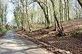 Lane through Steephill Wood - geograph.org.uk - 1235224.jpg
