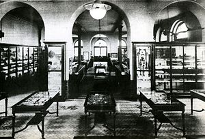 Lapworth Museum of Geology - Exhibition hall of the Lapworth Museum of Geology, c. 1930.