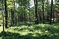 Lasy Łączańskie - panoramio (3).jpg