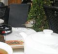 Layer Cake Addicted Sparrow (25982149251).jpg