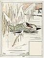 Le-vilain-petit-canard-26-525bb8d5.jpg