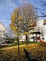 Leimen November 2012 - panoramio (14).jpg