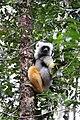 Lemurien 2756a.JPG