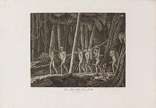 Les Puris dans leurs forêts