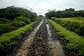 Leucas sp Road Sathanur, Perambalur JEG2894 .jpg