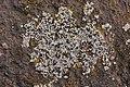 Lichen (38913391640).jpg
