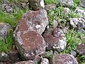Lichens on Shoreline Rocks - geograph.org.uk - 1353609.jpg