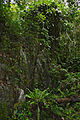 Limestone Outcrops along the boardwalk (23559933646).jpg