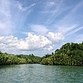 Loboc River, Bohol Philippines 16.jpg