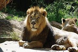 London zoo, UK (4827890430)
