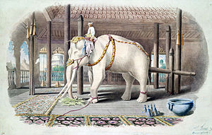 White elephant - A white elephant at the Amarapura Palace in 1855