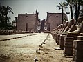 Luxor Temple Avenue of Sphinxes (9794753554).jpg