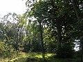 Mains Plantation - geograph.org.uk - 49121.jpg