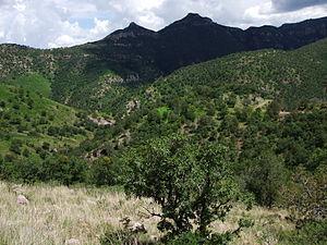 Cumbres de Majalca National Park - Sierra de Majalca
