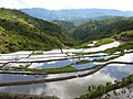 Maligcong rice terraces (3300098354).jpg