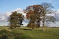 Mature trees at Stonea Camp - geograph.org.uk - 1053659.jpg