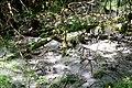 Maya Wendler - GPS 51.201643, 6.883316 - Naturschutzgebiet Unterbacher See (Eller Forst) 40627 Duesseldorf (4).jpg