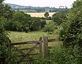 Meadow near Budleigh - geograph.org.uk - 1382431.jpg