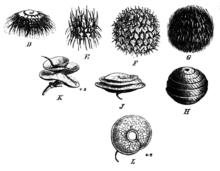 Hedgehogの意味・使い方・読み方   Weblio英和辞書