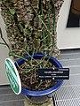 Medicinal Plants - US Botanic Gardens 04.jpg
