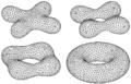 Metamorphose-torus-4ppfl.png
