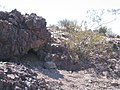 Mojave Desert Tortoise (Gopherus agassizii) (6011953511).jpg