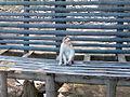 Monkey in rest.jpg