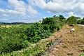 Morong, 2108 Bataan, Philippines - panoramio (13).jpg