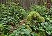 Mount Seymour Provincial Park, BC (DSCF8936).jpg