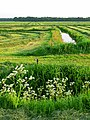 Mowed hay fields with ditch in Laaghalerveen; North-Netherlands, in the spring of 2012.jpg