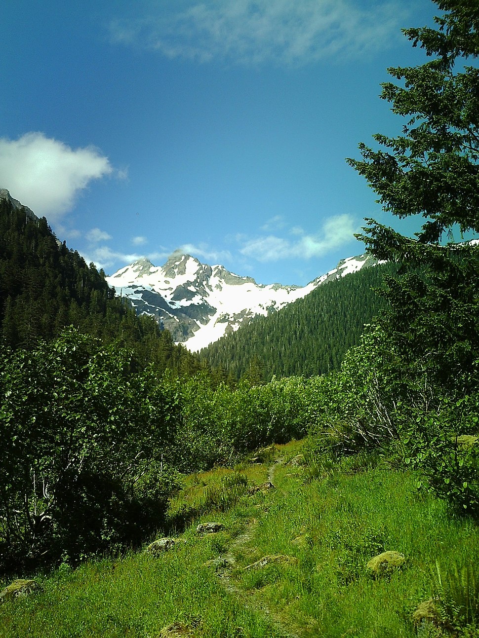 Mt. Anderson From East Fork Quinault Valley.JPG