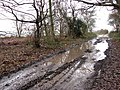 Muddy track - geograph.org.uk - 1077687.jpg