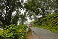Munnar,Kerala.jpg
