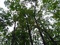 Mushrooms! Mill Trail Umstead NC SP 4248 (6641350921) (2).jpg