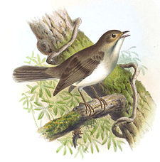 Illustration av Joseph Smit 1869