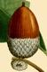 NAS-007f Quercus bicolor acorn.png