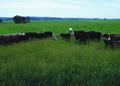 NRCSMO02014 - Missouri (4753)(NRCS Photo Gallery).tif