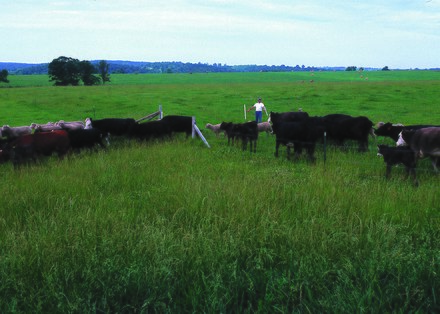 Rotational grazing with pasture divided into paddocks, each grazed in turn for a short period NRCSMO02014 - Missouri (4753)(NRCS Photo Gallery).tif