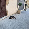 Naro - sleeping dog.jpg