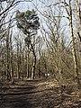 Nationaal Park Kennemerland (41327499162).jpg