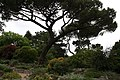 National Botanic Garden,Dublin,Ireland - panoramio (28).jpg