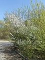 Nature in Smolensk - 04.jpg