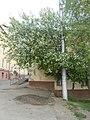 Nature in Smolensk - 52.jpg