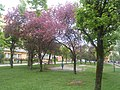 Nature in Smolensk - 61.jpg