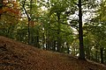 Nature reserve Vlčí důl in autumn 2014 (9).JPG