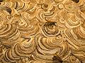 Nestbau der gemeinen Wespe.jpg