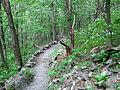 New Trail Elk Knob NC SP 0913 (3774142086).jpg