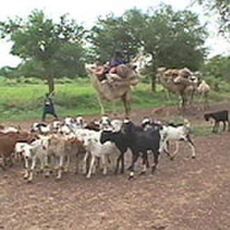 Pastoralism - Tuareg pastoralists and their herds flee south into Nigeria from Niger during the 2005–06 Niger food crisis.